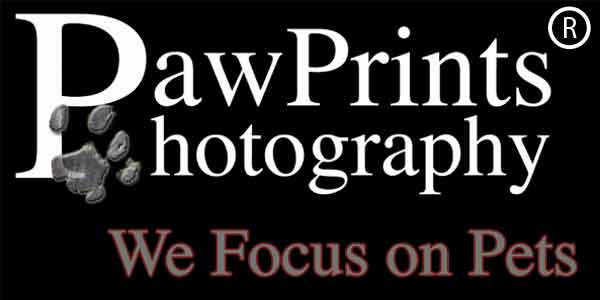 northern virginia pet photography logo